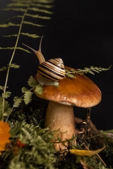 Caracol fofo com concha listrada fica no topo de um grande cogumelo boleto crescendo através de musgo e folhas caídas na floresta