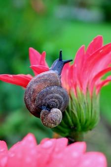 Caracol mãe, caracol bebê, carregar, dela, concha, escalando, ligado, um, vívido, cor-de-rosa, flor