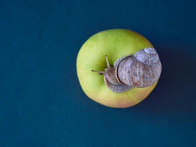 Caracol na maçã no fundo.