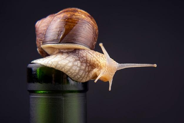 Caracol uva em uma garrafa no escuro. molusco e invertebrado. alimentos gourmet à base de proteína de carne.
