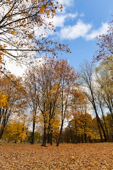 Características do clima de outono na floresta ou no parque, árvores com folhagem colorida e multicolorida