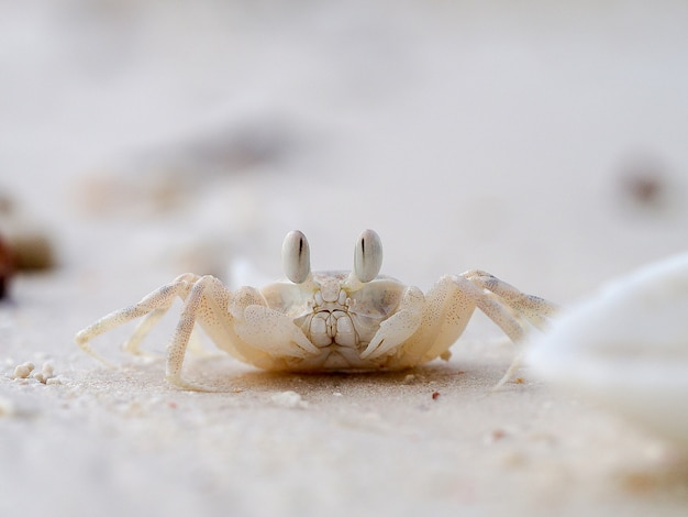 Caranguejo exótico na praia