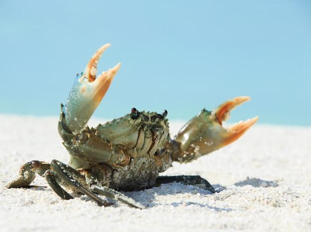 Caranguejo na praia