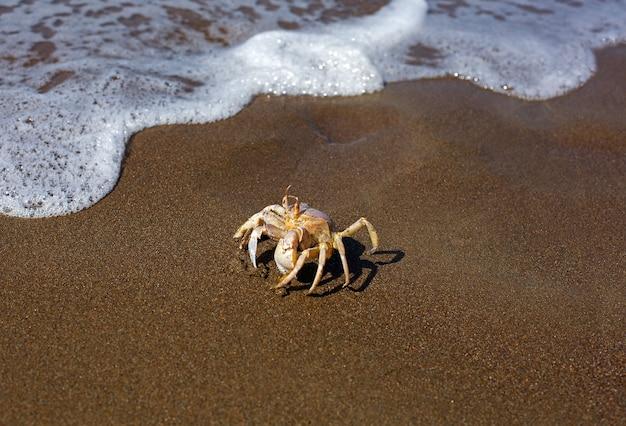 Caranguejo perto da água da espuma do mar atirada na praia de areia