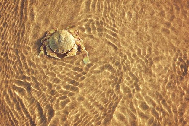 Caranguejos na praia e o mar nas ondas