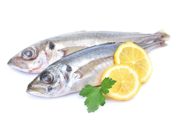 Carapau peixe