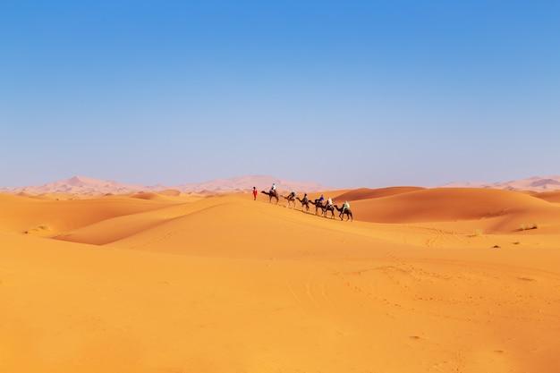Caravana de camelos ao pôr do sol no deserto do saara.