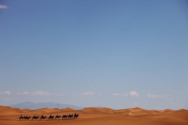 Caravana de camelos em um deserto em xinjiang, china