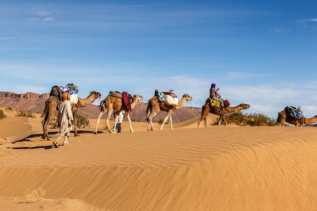 Caravana de camelos no deserto do saara