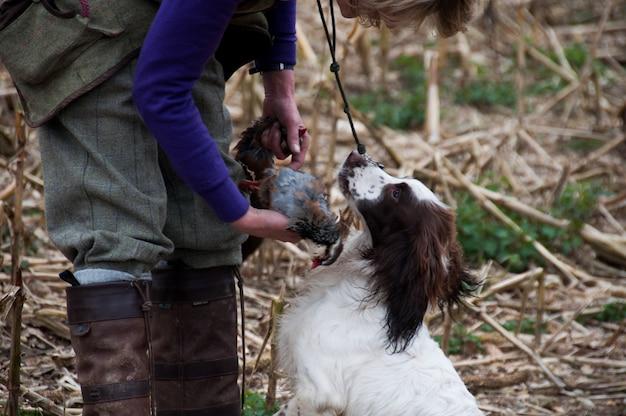 Carnívoro galo cachorro aves caça galinha