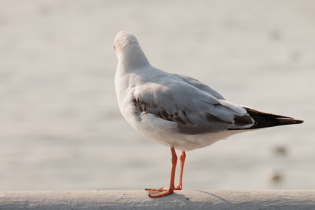 Carrinho de gaivota e olhando para o mar.