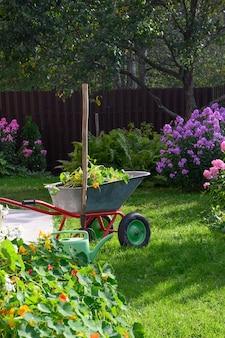 Carrinho de mão cheio de composto e flores em um gramado verde com flores flox bem cuidadas em uma casa de fazenda particular. vertical. limpeza sazonal do jardim antes do outono. ao ar livre.