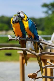 Carrinho de papagaio colorido na árvore