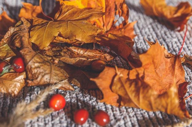 Carro de brinquedo amarelo de fundo outonal e folhas de bordo de outono laranja secas em suéter de malha cinza obrigado ...