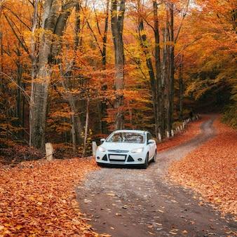 Carro em um caminho da floresta