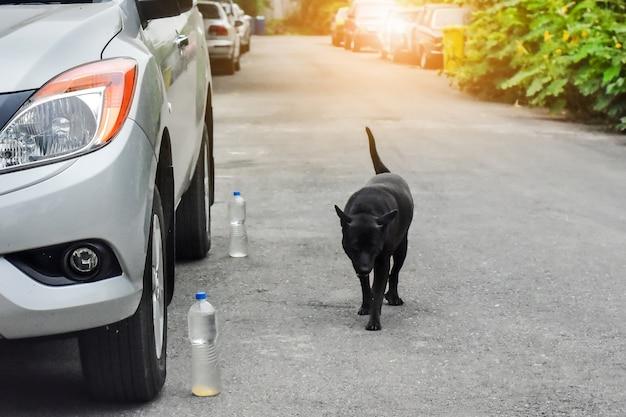 Carro estacionado na rua e cachorro