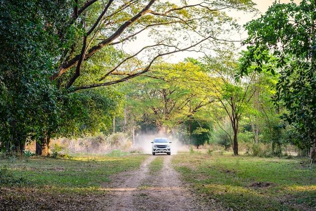 Carro na estrada da floresta, viagens de aventura