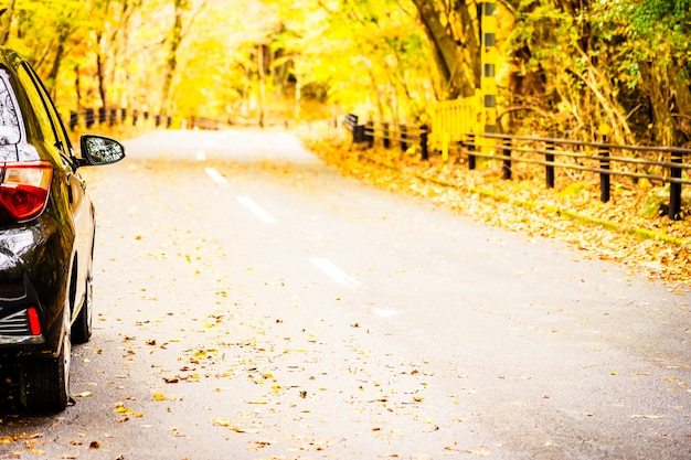 Carro na estrada na floresta de outono