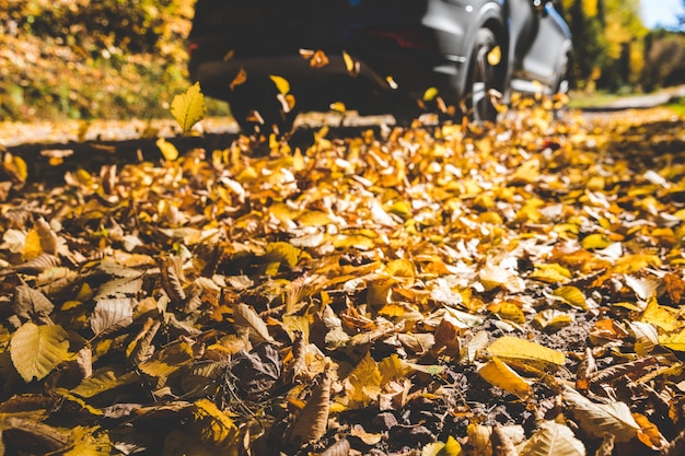 Carro passando e fazendo folhas de outono voar