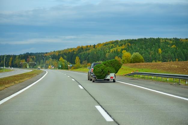 Carro transporta árvores