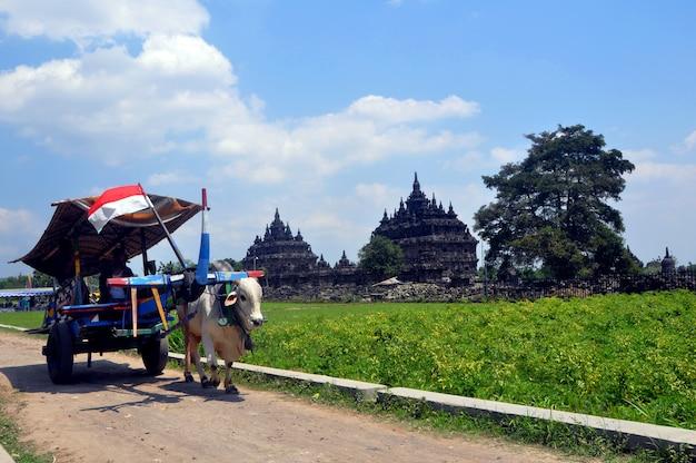 Carroça de boi passa pelo templo plaosan