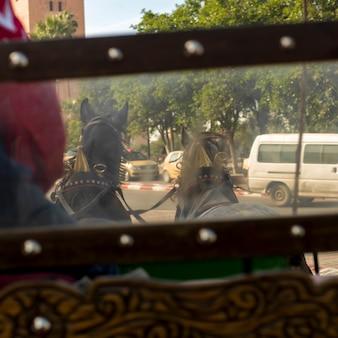 Carruagem horsedrawn, estrada, marrakesh, marrocos