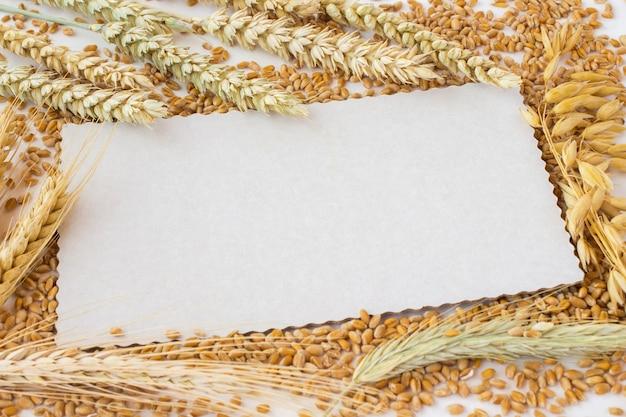 Cartão branco no espaço dos grãos. espigas de trigo e centeio, espigas de aveia.