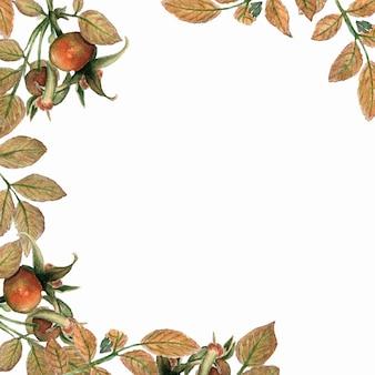 Cartão brier em aquarela. filiais de rosa de cão e quadro das folhas no fundo branco.