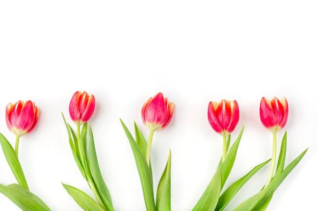Cartão com moldura de tulipas frescas sobre fundo branco. fundo de mulheres, mães, dia dos namorados, aniversário e outros eventos. maquete plana leiga para sua rotulação ou cópia espaço para texto