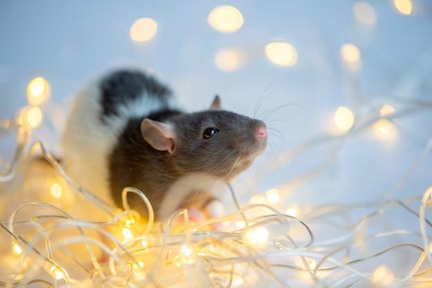 Cartão de ano novo símbolo do ano novo 2020 rato no bokeh de luzes de natal