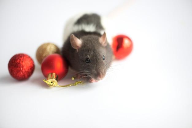 Cartão de ano novo símbolo do rato do ano novo 2020 com enfeites de decoração de natal em branco
