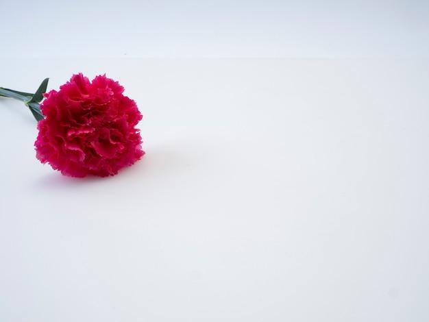 Cartão de dia das mães, lindo cravo