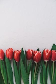 Cartão de felicitações. buquê de tulipas vermelhas em fundo branco