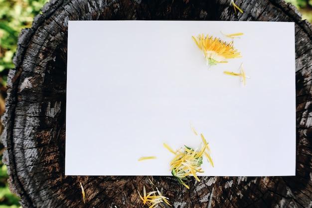 Cartão de felicitações em branco em fundo natural