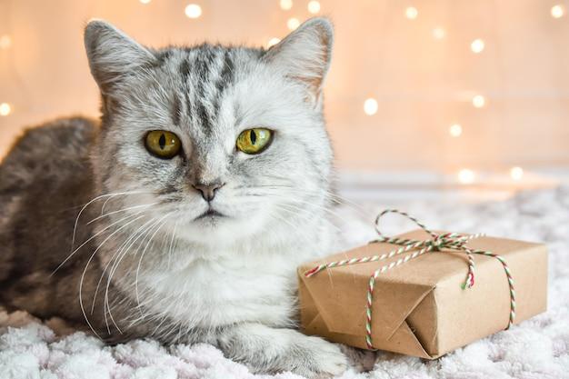Cartão de natal com gato listrado contra fundo de luzes
