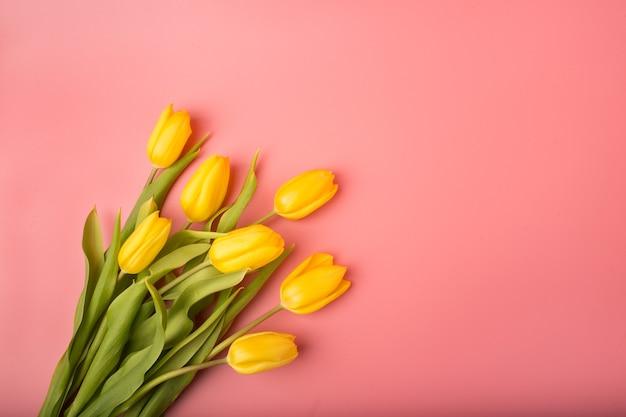 Cartão de primavera: tulipas amarelas sobre um fundo coral. vista de cima, plano.