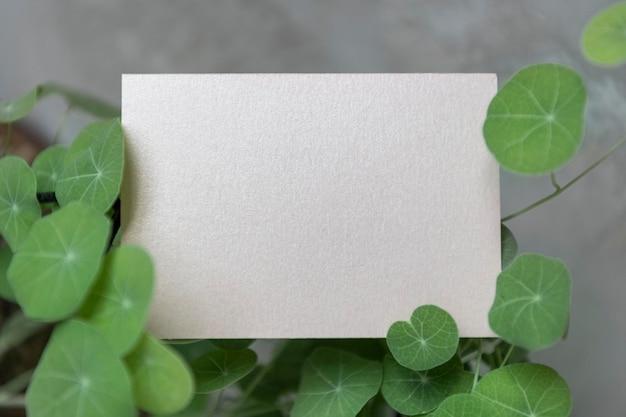 Cartão em branco cercado por folhas de pennywort