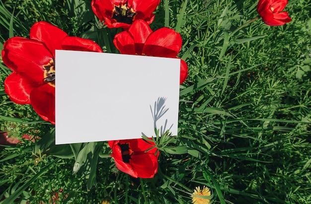 Cartão em branco em flores de papoula e campo de grama, cartão postal de papel simulado