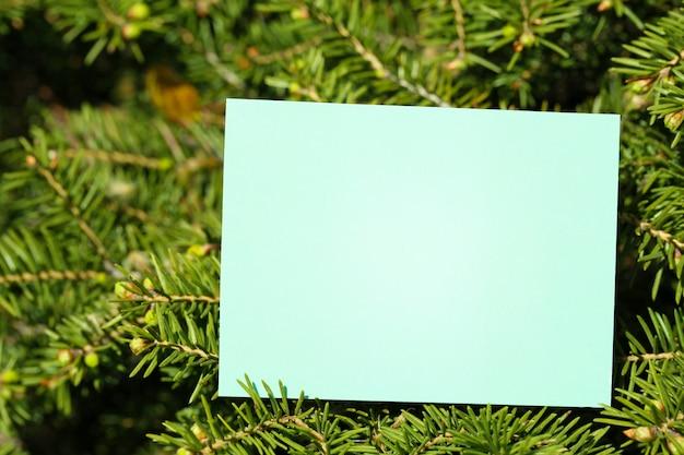 Cartão em branco na árvore ao ar livre
