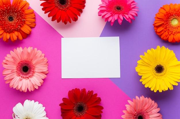 Cartão vazio branco rodeado por margaridas gerbera