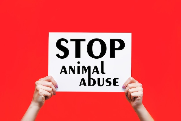 Cartaz branco com um slogan pare o abuso de animais em mãos femininas isoladas em um fundo de cor vermelha