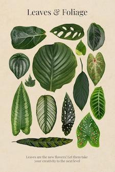 Cartaz de folhas e folhagens