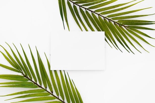 Cartões de visita em branco isolados no fundo branco com duas folhas de palmeira