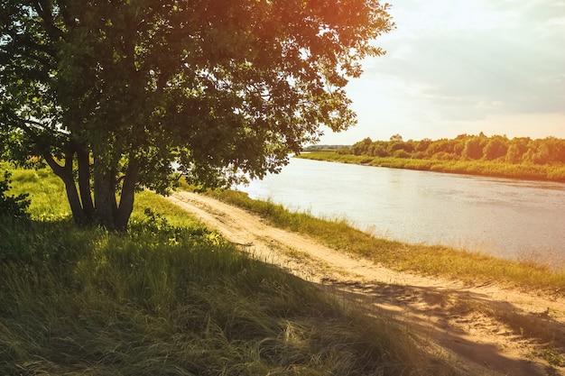 Carvalho à beira da estrada na margem do rio