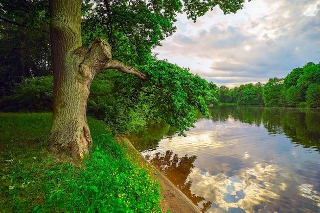 Carvalho à beira da lagoa no central park da cultura e descanso em são petersburgo.