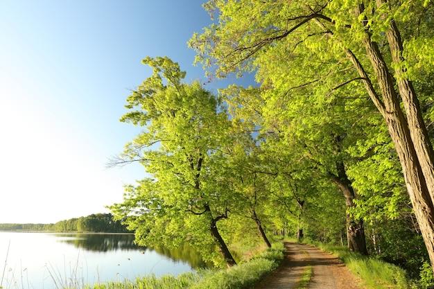 Carvalhos à beira de um lago em uma manhã ensolarada de primavera