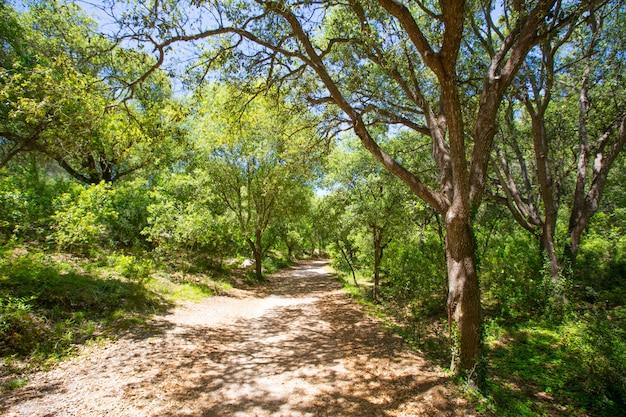 Carvalhos da floresta de menorca em cala en turqueta ciudadela