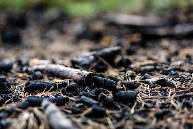 Carvões de fogo na floresta.