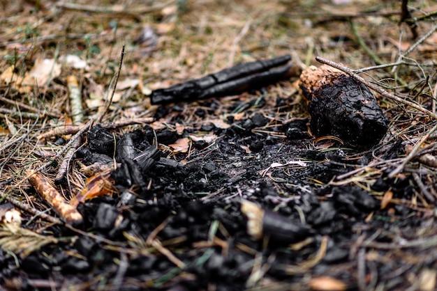 Carvões de fogo na floresta