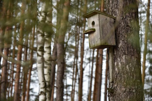 Casa antiga de madeira para pássaros feitos à mão na árvore